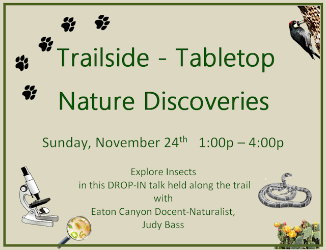 Nature Discoveries, November 24 1pm-4pm